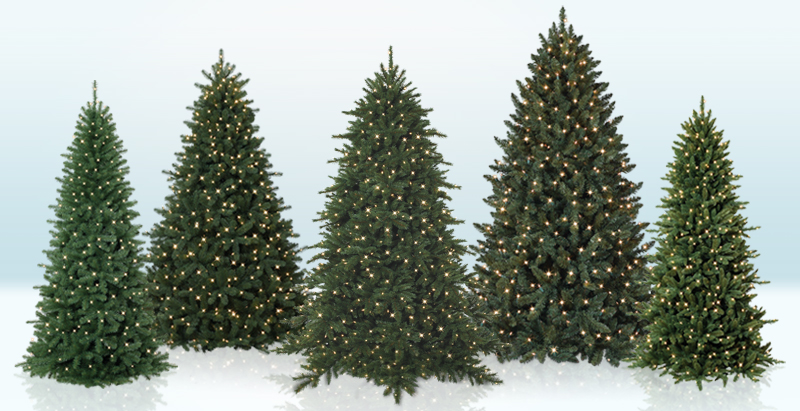 Special Tree Categories | Christmas Tree Market