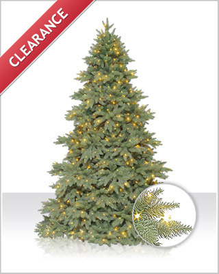 Columbia Valley Fir Christmas Tree