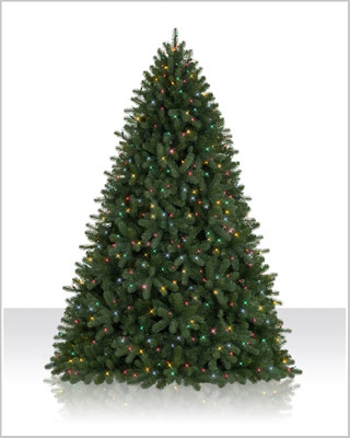 6 Foot Royal Douglas Christmas Tree with  Multi Lights