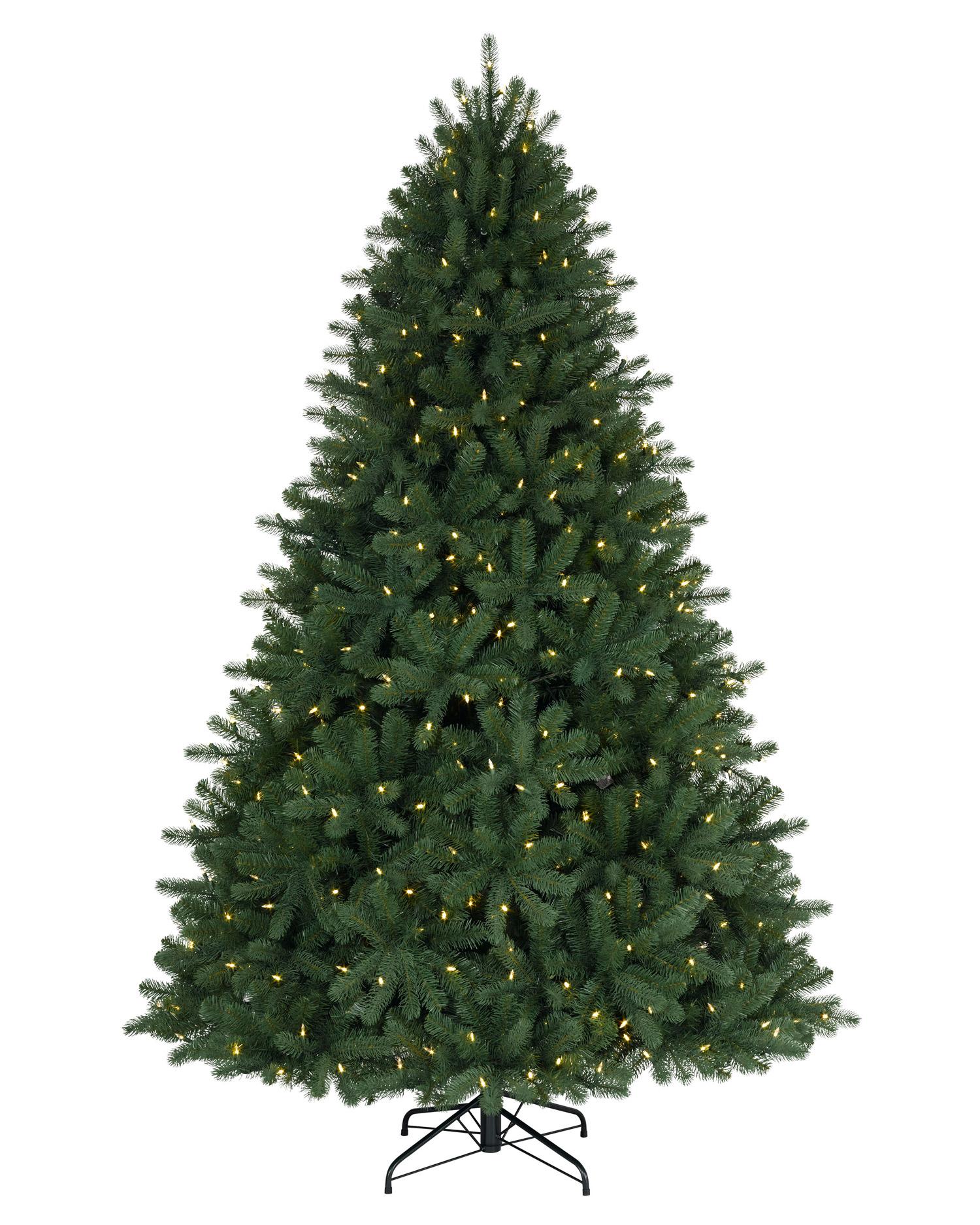 75 foot royal douglas fir clear led christmas tree - 2 Ft Christmas Tree