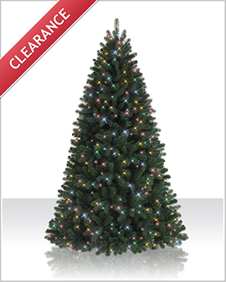 5.5 Foot  Prelit Northeastern Spruce Christmas Tree with Multi Lights