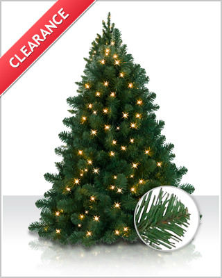 Bethlehem Fir Christmas Tree