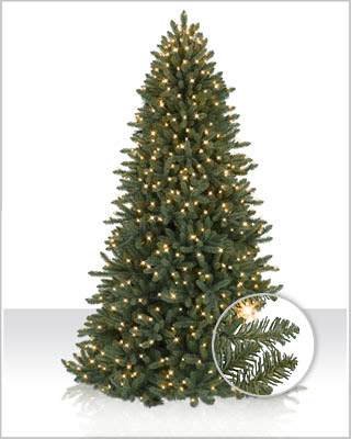 Colorado Blue Spruce Christmas Tree