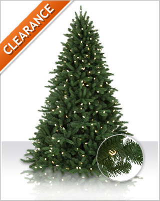 Jackson Fir Christmas Tree | Christmas Tree Market
